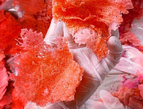 Edible Coral, Het Nieuwe Instituut